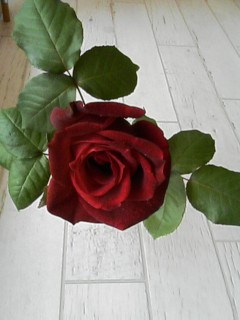 のぞみ整体院ブログ  さらば薔薇色の日々よ 6df4ac1ed